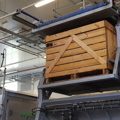 automated line for sorting vegetables in pallet containers