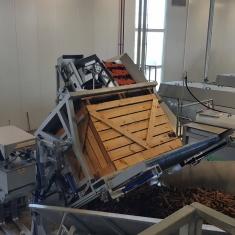 linia sortująca marchew przechowywanych w skrzyniopaletach